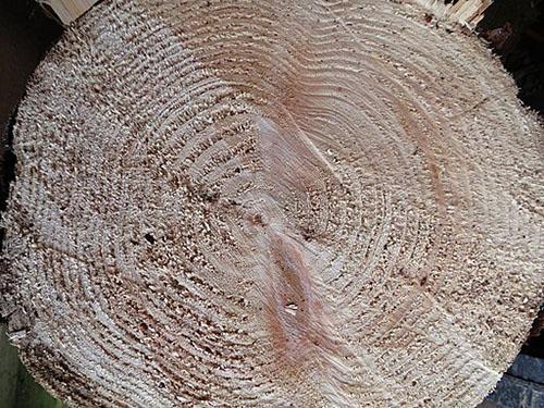 Douglas Fir wood