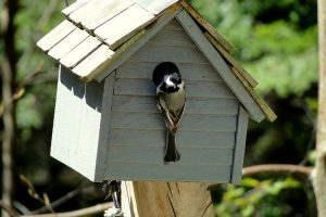 5 Best Types of Wood for Birdhouses (Making Your First Birdhouse)