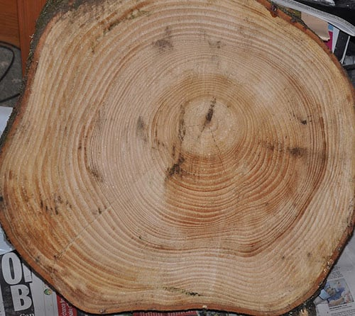 Pine softwood