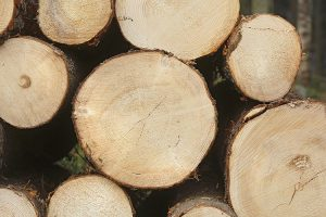 Hardwood vs. Softwood: What Are The Differences?