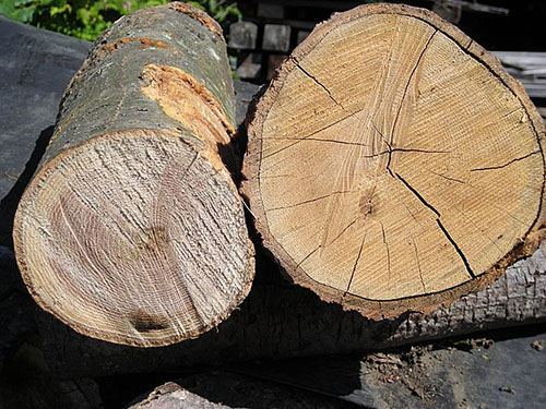 Two wood logs