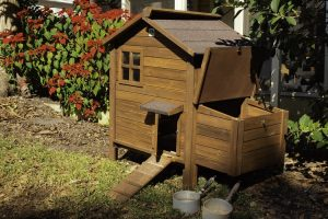 Best Wood for a Chicken Coop