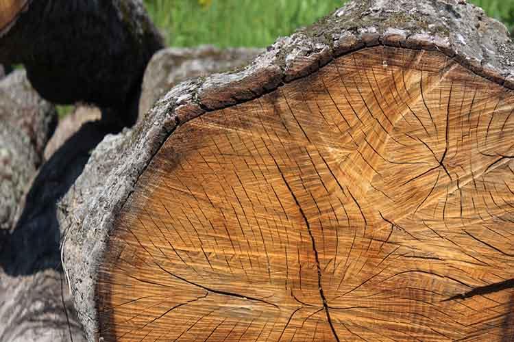 oak-wood-cut