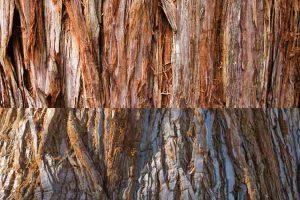Redwood vs. Sequoia (Comparing Wood Species