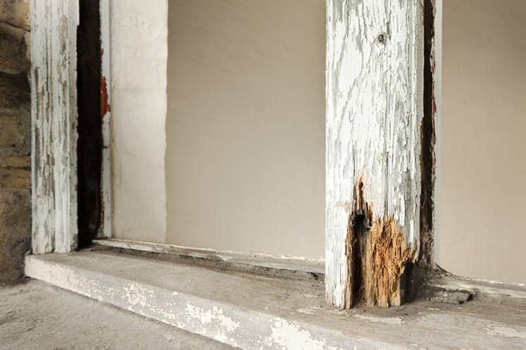 Close up of rotten sash window frame