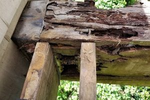 Will Bleach Prevent Wood Rot?