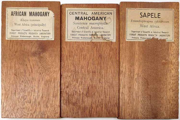 African Mahogany Woods