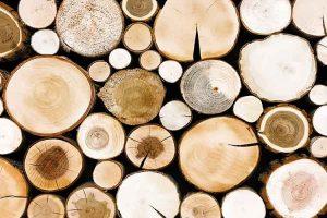 Teak vs. Beech Wood