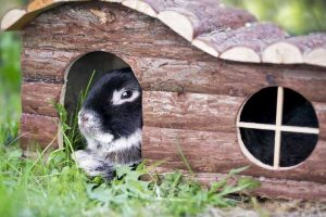 Best Wood for Rabbit Hutches