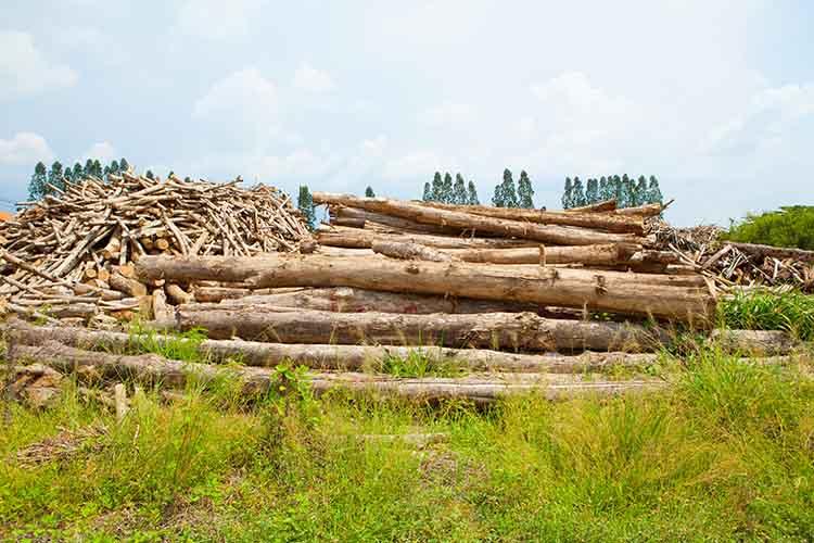 Stack of teak wood log
