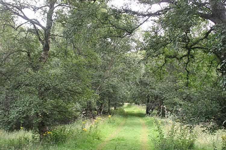 Alder wood, Hopes - geograph.org.uk