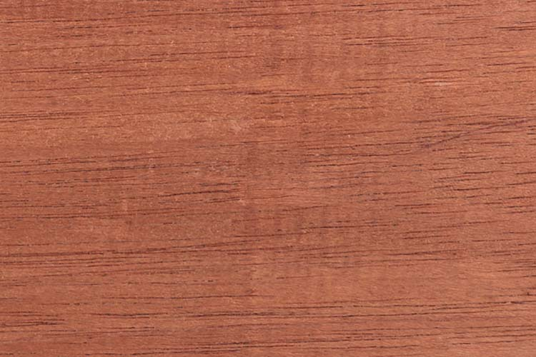 Wood from the tropical rainforest - Suriname - Carapa guianensis Aubl