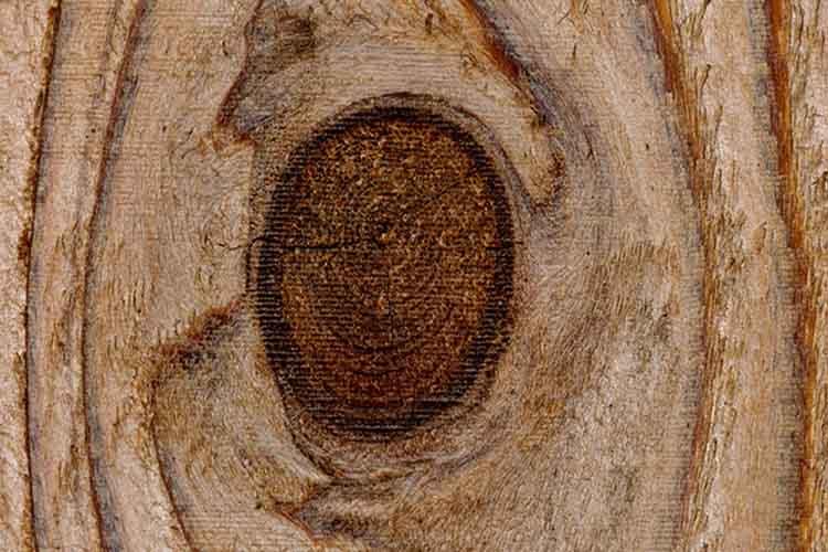 treated pine wood