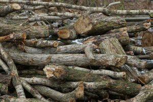 Types of Poplar Wood
